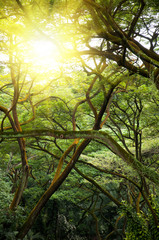 Green jungle forest with ray of light.