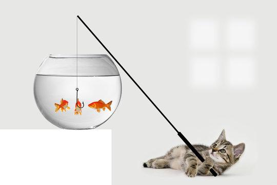 Katze angelt im Goldfischglas