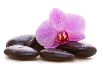 Aluminium Prints Orchid Massage Stones with Orchid