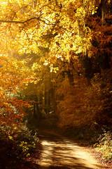 Weg in einem lichtdurchfluteten Herbstwald