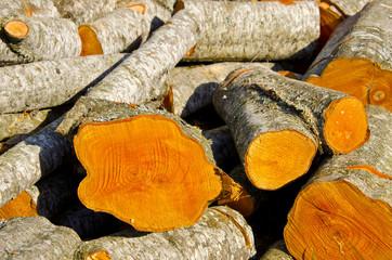 alder firewood in spring