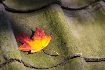 Colorful autumn leaf on a roof