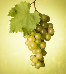 bunch of grapes on green background