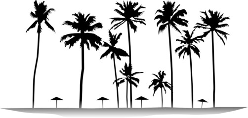 Tropical palms isolated on white background