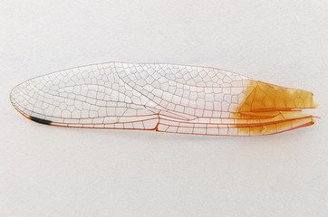 Dragonfly Wing