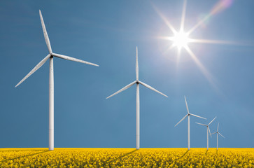 Wind turbines on a bright sunny day in a field with cole seed