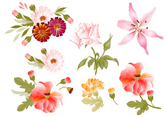 Color illustration of flowers in vector paintings