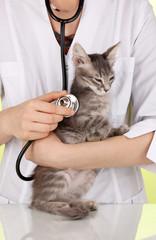 Veterinarian examining a kitten on green background