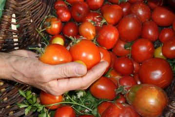 Tomaten, Tomate, gesund, rot, hand, bio, vegetarisch