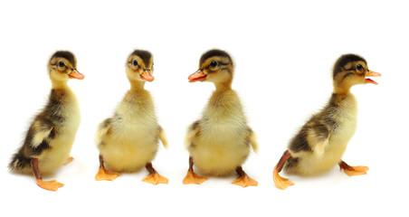 Ducklings - creative group