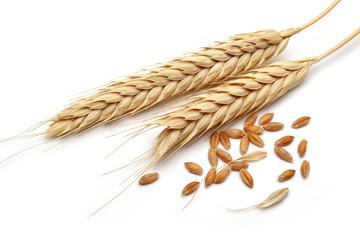 Fototapeta wheat ears with wheat grains isolated on white background obraz