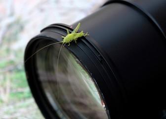Fotografie Journalismus