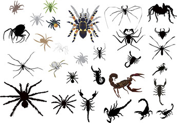 set of spiedrs and scorpions isolated on white
