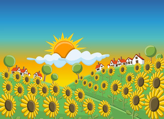 Sunset over beautiful sunflowers field on green hill with houses