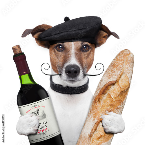 Fototapete french dog wine baguette beret