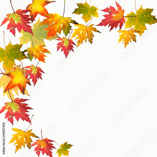 Farben des Herbstes: Bunte Ahorn-Blätter\