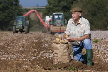 Farmer with sack of potatoes kneeling in sunny, rural field with tractors in background