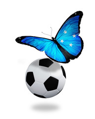 Concept - butterfly with Micronesia flag flying near the ball, l
