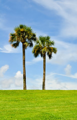 two palmtrees in a lush meadow