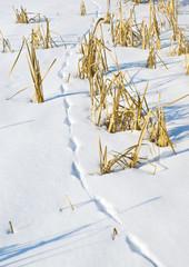 Fototapete - Fox trace on the frozen bog