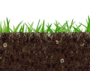 Fototapeta inside view of soil vital activity with roots and larvae obraz