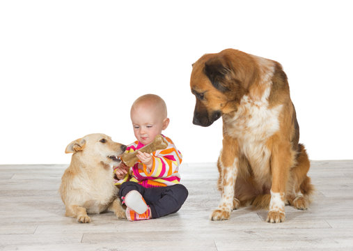 Baby feeding one dog watched by another