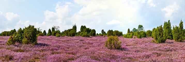 Heideblüte, Panorama
