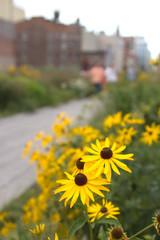 High Line Park, NY
