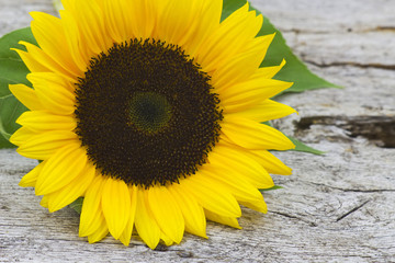 sunflower on old wooden background