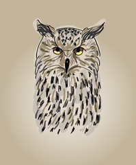 Design owls