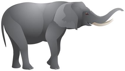 Elephant realistic vector illustration