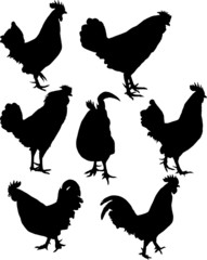 seven  rooster silhouettes isolated on white