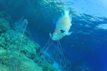 Environmental problem -fish killed by fisherman's gill net