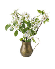 Spring flowering branches of pear in vase