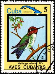 Mellisuga Helenae, from Series Cuban Birds