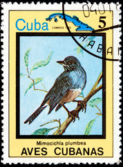 Mimocichla Plumbea, from Series Cuban Birds
