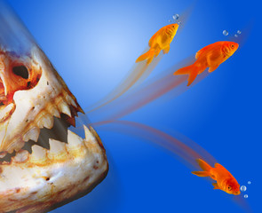 Goldfish Escaping  From Monster.