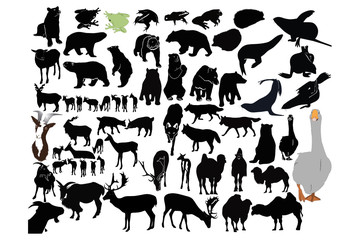 vector animals collection isolated