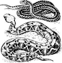 Two snakes on the ground
