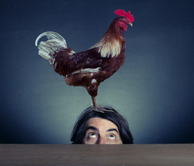 Rooster stands on the head of a man.
