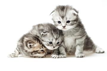 Three little kitten