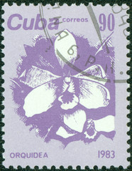stamp printed in CUBA shows a Orchid