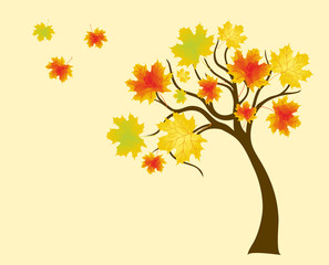 autumn tree with colorful leafs of maple, background for design