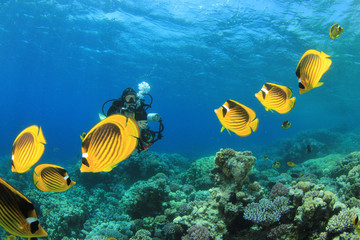 Female Scuba Divers swim through tropical fish on ocean reef