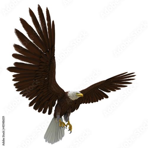 Fototapete eagle