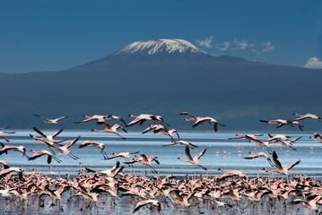 Obraz Uccelli con il Kilimangiaro - fototapety do salonu
