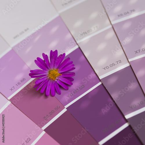 Nuancier ton violet