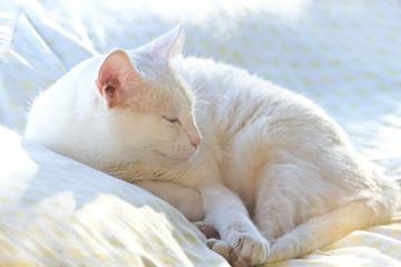 White cat sleeping on white bedding in the sunshine