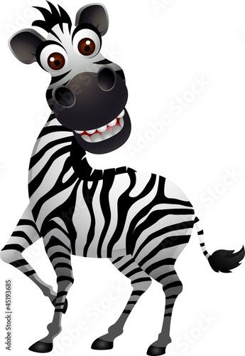 Zebra Faces Stock Images RoyaltyFree Images amp Vectors