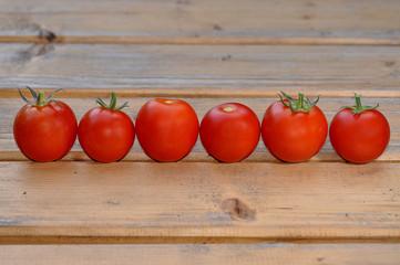 Tomaten in Reihe / Linie